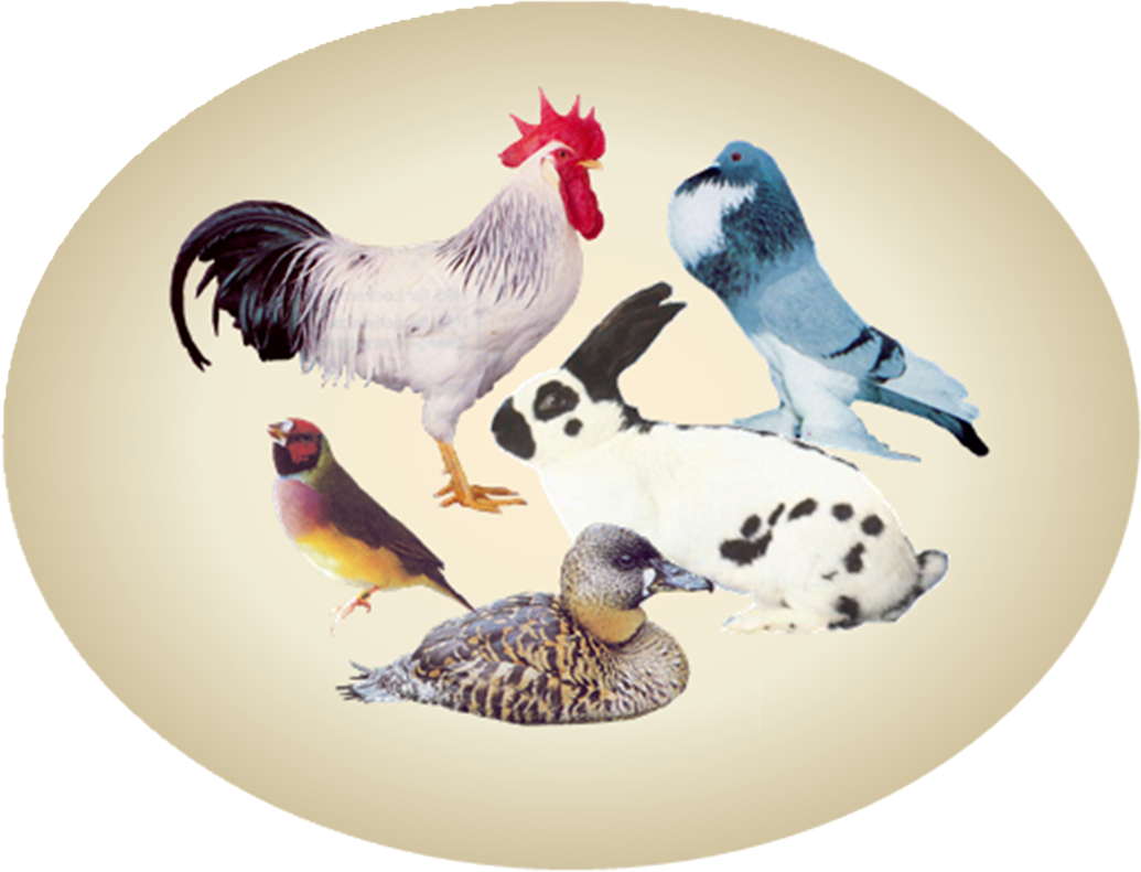 http://www.kleintierzuchthaslach.at/wp-content/uploads/Logo/Logo_oval.png